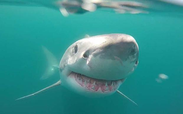 sharkmain1_3348821b